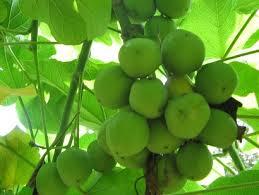 Lowongan PT Energi Agro Nusantara