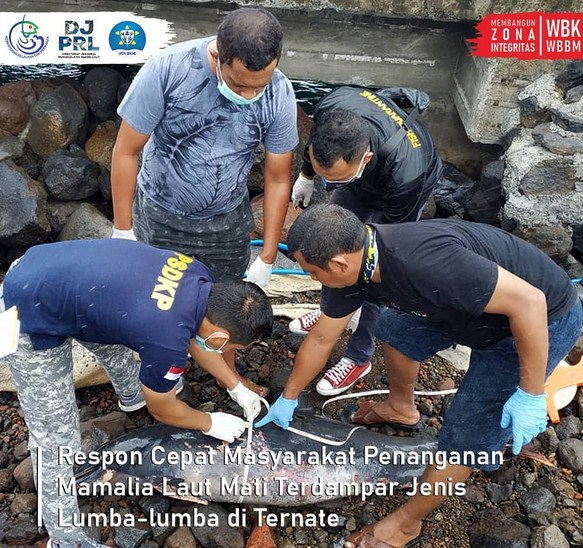 Lowongan Loka Pengelolaan Sumberdaya Pesisir dan Laut (PSPL) Sorong